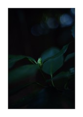 This work is 3/18 works taken on 2020/1/9 (shin ikegami) Tags: sony ilce7m2 a7ii sonycamera 50mm lomography lomoartlens newjupiter3 tokyo 単焦点 iso800 ndfilter light shadow 自然 nature naturephotography 玉ボケ bokeh depthoffield art artphotography japan earth asia portrait portraitphotography