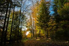 Unser Wald  (31) (berndtolksdorf1) Tags: deutschland thüringen wald bäume jahreszeit herbst laubfärbung trees autumn outdoor