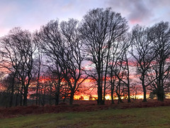 Sunset Through The Trees (Marc Sayce New 1) Tags: sunset sundown trees woolmer range conford liphook south downs national park hampshire winter february 2020 notrealtags bikini speedo topless naked nude milf fetish lingerie underwear butt bum hot mature boobs sex girl ass panty panties sexy stockings lycra pantyhose tights nipples swimsuit naturist candid foot feet wife pants kinky boots knee high leather g string thong shorts