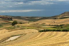Rural landscape near Serracapriola, Apulia, Italy (clodio61) Tags: apulia europe foggia italy puglia serracapriola southern agriculture color country day field green hill land landscape meadow nature olive outdoor photography plant rural scenic summer sunny tree