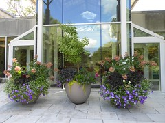 Lisle, IL, Morton Arboretum, Administration Center, Planter Trio (Mary Warren 14.7+ Million Views) Tags: lisleil mortonarboretum garden park botanicalgarden nature flora plants green leaves foliage ceramicplanter window glass reflection blooms blossoms flowers