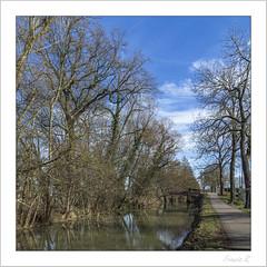 Arbres dénudés (Francis =Photography=) Tags: europa europe alsace grandest 67 basrhin oberschaeffolsheim canal labruche canaldelabruche arbres trees bäume channel kanal rivière river fluss