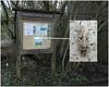 Agonopterix arenella, Kingmoor Nature Reserve, 18 February 20