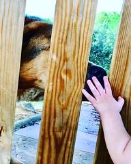 Boop my nose 🐶🐕🐾https://instagram.com/sugar_sweetdoggo?igshid=1065lpn29ciug #cute #dog #crueltyfree #vegan #pet #animal #inspiration (petunianormalname) Tags: crueltyfree animal vegan inspiration cute dog pet