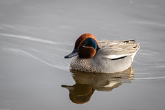 Photo of Another Teal
