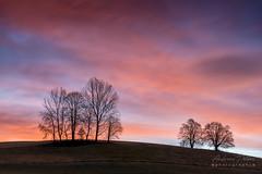 A7300495_s (AndiP66) Tags: sunrise sonnenaufgang bäume trees huttwil emmental emmentalvalley bern winter sun sonne morgen morning schweiz switzerland sony sonyalpha 7markiii 7iii 7m3 a7iii alpha ilce7m3 sonyfe70300mmf4556goss fe70300mm 70300mm f4556 emount andreaspeters