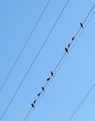 Cormorants on Powerlines (Gilli8888) Tags: nikon p900 coolpix egypt rivernile river nile birds cormorants ten 10 waterbirds blue powerlines linear four
