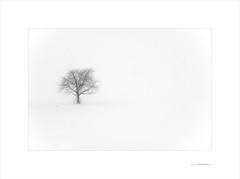 Las formas del invierno (E. Pardo) Tags: invierno winter schnee snow nieve nebel niebla fog árbol tree baum paisaje landscape landschaft formas formen forms steiermark austria