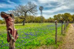 Boot Fence on the Willow City Loop, Gillespie County, Texas (myoldpostcards) Tags: willowcity texas tx gillespiecounty willowcityloop hillcountry boots fence bluebonnets windmill spring leatherboots cowboy cowgirl fredericksburg fencepole fencepost