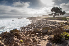 Morning Fog in Pacific Grove (Jill Clardy) Tags: ca california monterey montereybayaquarium northamerica pacificgrove usa 202002089l8a1181hdr fog foggy morning cypress trees
