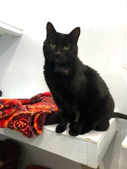 Cola - 9 year old spayed female