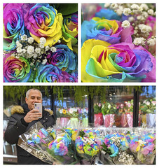 Rainbow roses - we saw this interesting colored roses in a grocery store. (lezumbalaberenjena) Tags: flor flower flora flores multicolored multicolor arco iris arcoiris rainbow rosa rose roses
