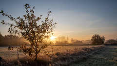 Frosty morning in November (Guy L Janssens) Tags: demerdonken zonsopkomst landschap nevelig demervallei weer belgië seizoenen herfst autumn belgium landscape misty seasons sunrise weather