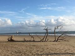 La Grande Côte, Saint-Palais-sur-Mer (17) (Yvette G.) Tags: arbre mer plage nouvelleaquitaine poitoucharentes charentemaritime 17 saintpalaissurmer lagrandecôte