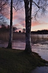 Birches and barn (Stefano Rugolo) Tags: stefanorugolo pentax pentaxk5 kepcorautowideanglemc28mm128 kmount sunset birches barn trees lake water river sky clouds reeds sweden landscape ice reflections dusk