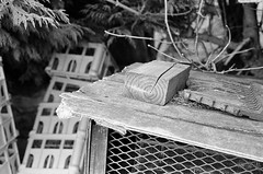 88470013 (chris_roebuck) Tags: ilford hp5 35mm film walton wakefield yorkshire