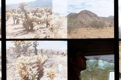 Cholla garden, Joshua Tree (wrenee.com) Tags: film halfframe kodak200 kodakgc200 nickelodeonphotoblaster joshuatree desert camping chollagarden