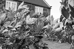 88470009 (chris_roebuck) Tags: ilford hp5 35mm film walton wakefield yorkshire