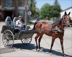Horse & buggy (Ben Tuinman) Tags: animals horses horsebuggy streets scenes city towns ontario canada canon rebelxti outdoors farms menonites streetscenes