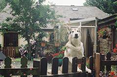 Beware of the wolf... (analoguesouls) Tags: 35mm film filmisnotdead analogue ishootfilm canonetql17giii lakedistrict cumbria uk unitedkingdom rayzandvoort analoguesouls