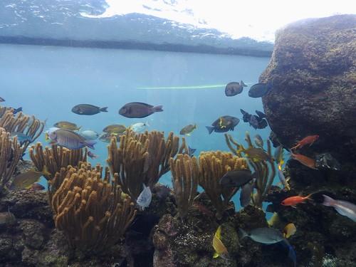 Bermuda Aquarium, Museum and Zoo