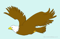 EAGLE FLYING GIF (colour&keep) Tags: eagle gif illustration animation wendyfrost bird motion flying cartoon flyingbirdgif baldeagle
