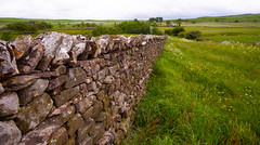 Beautiful Stone Cumbrian Wall (Adam Swaine) Tags: cumbria pennines pennineway stonewall walls rural england english englishlandscapes counties countryside uk ukcounties broads fields aonb nationalparks canon adamswaine 2019 beautiful countrylanes county northeast walks wall grass flora