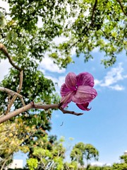 Stand tall !! #flowers #iphone #photography #beautyaround #wanderer #Taiwan (theraskingsley) Tags: flowers iphone photography beautyaround wanderer taiwan