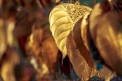 Golden Leaves #003 (axelord101) Tags: stillife pattern leaves travel golden