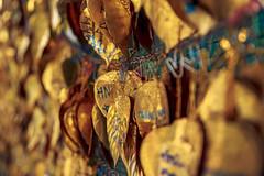 Golden Leaves #006 (axelord101) Tags: stillife pattern leaves travel golden