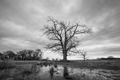Meadow mood.. (Bo Monsted) Tags: sigma 1424mm f28 dg hsm art tree landscape vinter meadow clouded sky bw black white