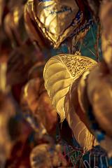 Golden Leaves #002 (axelord101) Tags: stillife pattern leaves travel golden