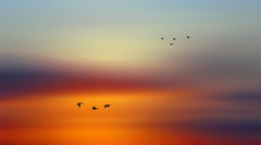 Solitude 720 (Wim Koopman) Tags: sky clouds cloudage moving birds geese flight flying bur sunset flowing glowing