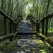 Mihu trail