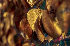 Golden Leaves #004 (axelord101) Tags: stillife pattern leaves travel golden
