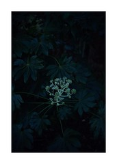 This work is 12/18 works taken on 2020/1/9 (shin ikegami) Tags: sony ilce7m2 a7ii sonycamera 50mm lomography lomoartlens newjupiter3 tokyo 単焦点 iso800 ndfilter light shadow 自然 nature naturephotography 玉ボケ bokeh depthoffield art artphotography japan earth asia portrait portraitphotography
