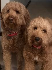 Milo & Mia