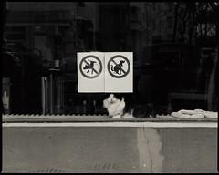 CatzWorld (.Dirk) Tags: berlin pentaxk5ii pentaxda3528macro smc prime bnw sw bw katze cat schaufenster windowdisplay schöneberg