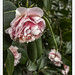 February Bloom