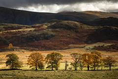 Lakeland Fells (He Ro.) Tags: keswick lakedistrict lakeland fell autumn autumnal colours trees highnest lowrigg cumbria walk nature outdoors landscape england uk