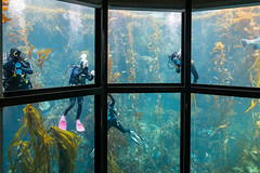 Window Washing Chores (Jill Clardy) Tags: ca california monterey montereybayaquarium northamerica pacificgrove usa 202002089l8a1247 window washers tank scuba divers diving housework cleaning cleaners tanks