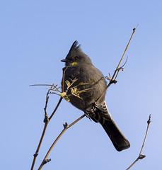 02192020000037706 (Verde River) Tags: rabbit gambelsquail bird birds cactuswren