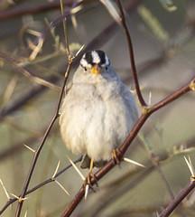 02192020000037653 (Verde River) Tags: rabbit gambelsquail bird birds cactuswren
