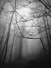 nebbia in Liguria (fotomie2009) Tags: liguria italy italia alberi fog nebbia mist misty foggy trees woodland sentiero path winter inverno monochrome monocromo bw landscape paesaggio bosco forest savage