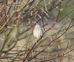 02192020000037647 (Verde River) Tags: rabbit gambelsquail bird birds cactuswren