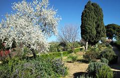 Valle dei Templi, Agrigento, Sicily, February 2020 068 (tango-) Tags: agrigento sicily sicilia sizilien italy italien italia valledeitempli