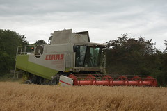 Claas Lexion 480 Combine Harvester cutting Spring Oats (3) (Shane Casey CK25) Tags: claas lexion 480 combine harvester cutting spring oats grain harvest grain2019 grain19 harvest2019 harvest19 corn2019 corn crop tillage crops cereal cereals golden straw dust chaff county cork ireland irish farm farmer farming agri agriculture contractor field ground soil earth work working horse power horsepower hp pull pulling cut knife blade blades machine machinery collect collecting mähdrescher cosechadora moissonneusebatteuse kombajny zbożowe kombajn maaidorser mietitrebbia nikon d7200