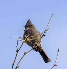 02192020000037708 (Verde River) Tags: rabbit gambelsquail bird birds cactuswren
