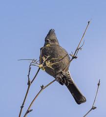 02192020000037705 (Verde River) Tags: rabbit gambelsquail bird birds cactuswren