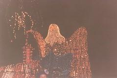 Image (3) (santos.apodaca) Tags: disneyland 1996 may may1996 california mainstreetelectricalparade parades